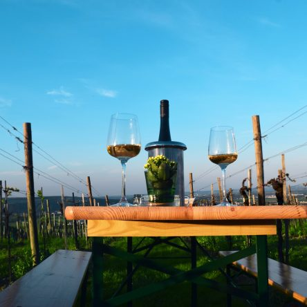 Vienna vineyard